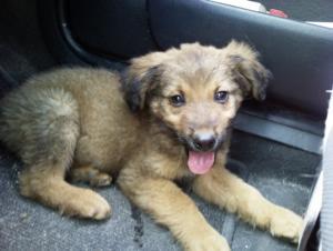 Най-сладкото кученце -осиновен!
