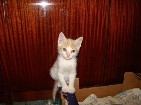 Добро и мило коте -осиновено!!