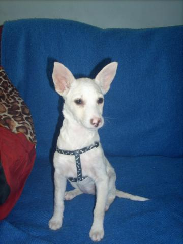 малко дребно кученце - Чара