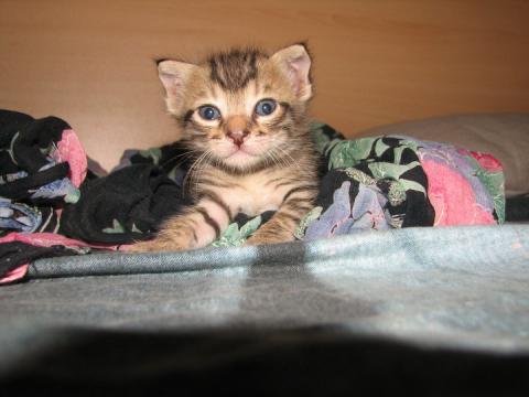 2 бебета котенца търсят дом!!!-Осиновени!