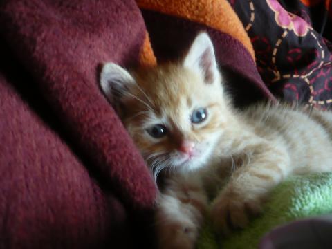 Котьо вече има дом!