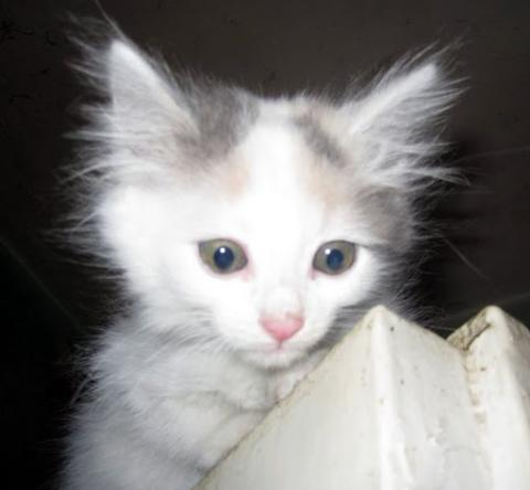 Подарявам спасени котета