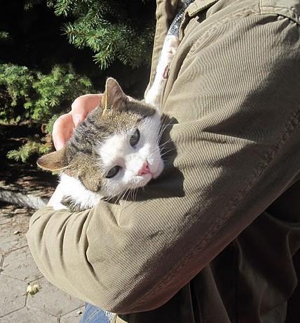 Домашен кот търси дом