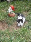 Любвеобилно  коте си търси дом !!