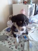 малко кученце - момче