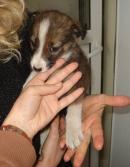 малко кученце - търсим му дом