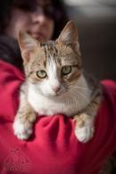 27 котки търсят дом - № Али