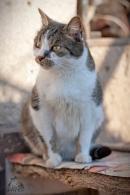 27 котки търсят дом - № 3 Брук
