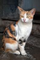 27 котки търсят дом - № 5 Вики