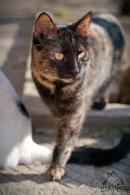 27 котки търсят дом - № 7 Дода
