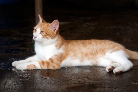 27 котки търсят дом - № 17 Принцеса
