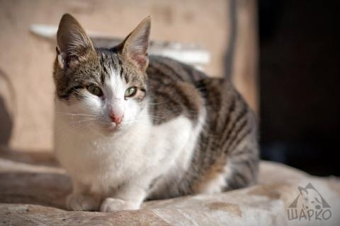 27 котки търсят дом - № 25 Улус