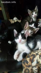 Котенца на 1 месец се нуждаят спешно от дом / дори приемен /
