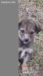 Сладки кученца -1-Топси