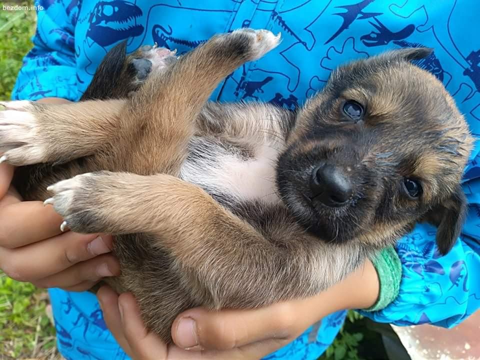 Подарявам кученца на 1 месец