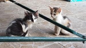 Подарявам 2 котенца на 6 седмици