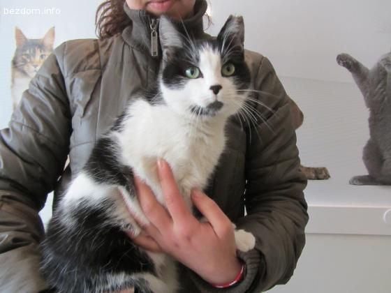 Подарявам  женско коте-Осиновена!
