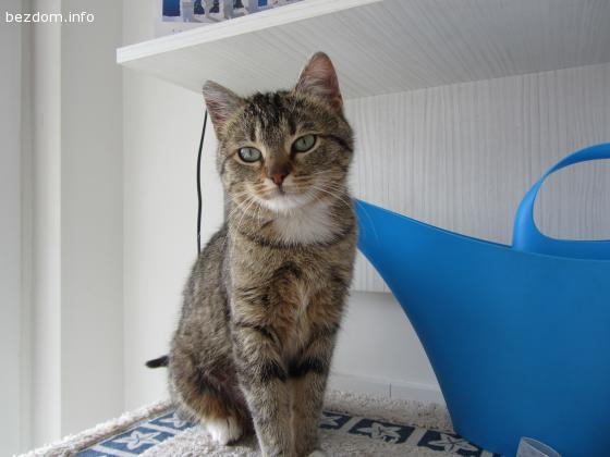 Подарявам женско коте- осиновена :)