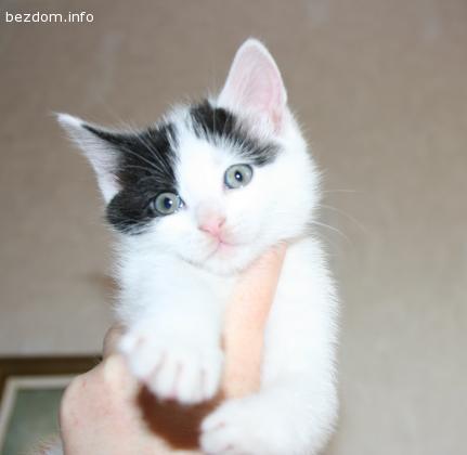 Подарявам малко котенце-осиновена