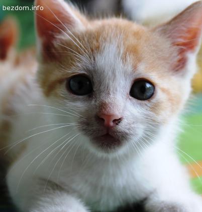 Подарявам малкИ сладкИ котенце