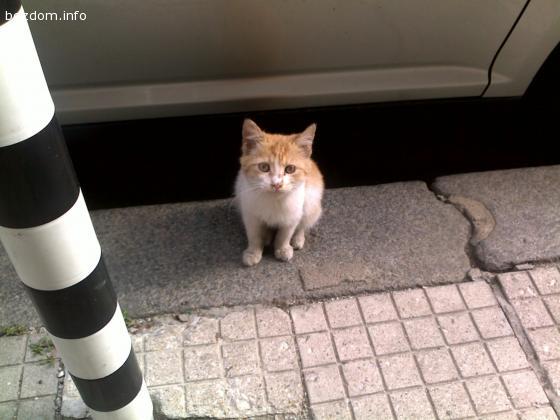 Мъри е осиновен:) в Бургас:))))