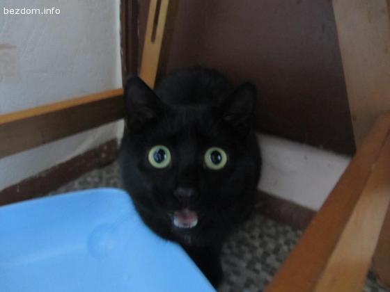 Черна маца със зелени очи- осиновена