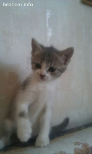 Подарявам женско котенце на 2 месеца