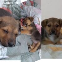 Малко кученце на 2 месеца