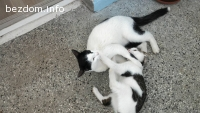 Подарявам 2 котета