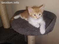 Мъжко котенце на 2 месеца