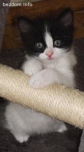 Подарявам мъжко котенце, на 2 месеца