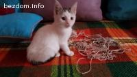 Подарявам малко бяло мъжко котенце под 2 месеца