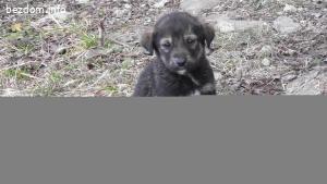 Сладки кученца - 2 - Рокси