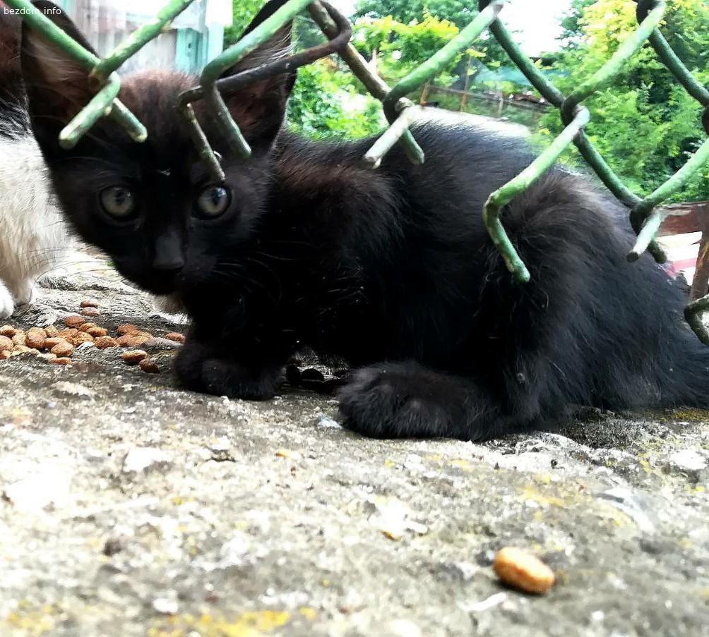 Подарявам черни женски малки котенца на 2 месеца