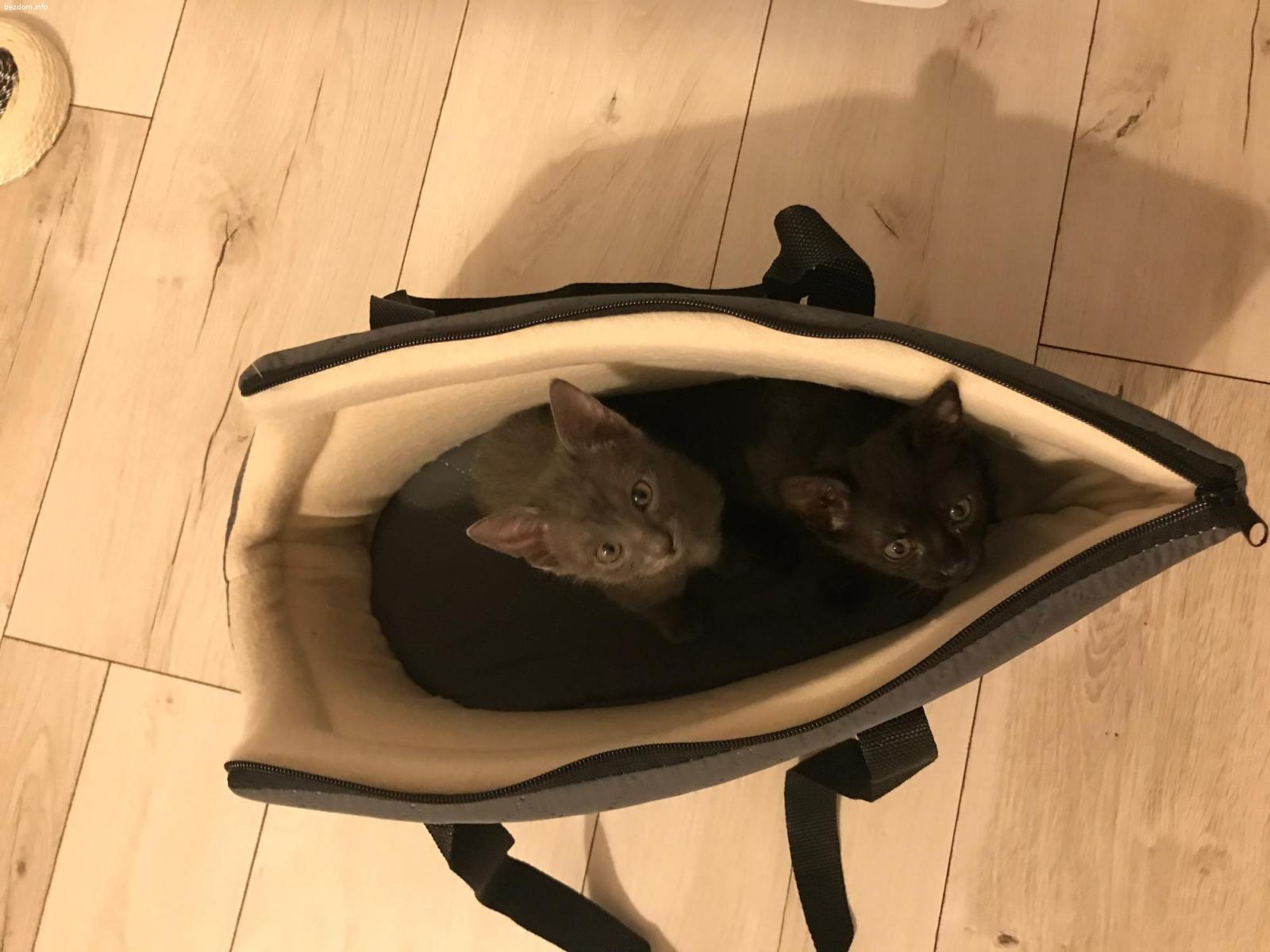 Котета на 2 месеца търсят дом