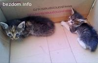 3 малки котенца търсят своя дом!