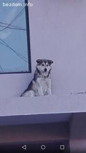 300 лв награда  изгубено или откраднато куче