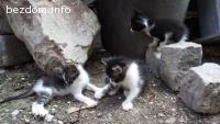 Подарявам 3 котета