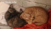 Подаряваме 3 намерени малки котенца