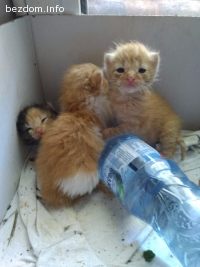 3 малчугана на около месец