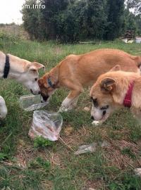 Намерени 3 женски кученца