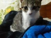 Коте на 3 месеца