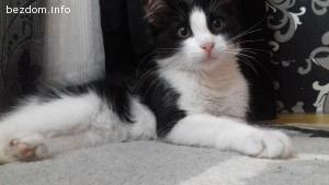 Мъжко коте на 3 месеца търси дом