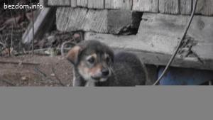 Сладки кученца - 3 -Чочи