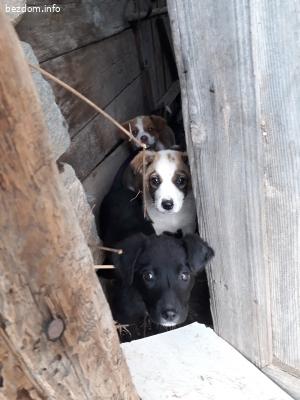 3 кученца без майка
