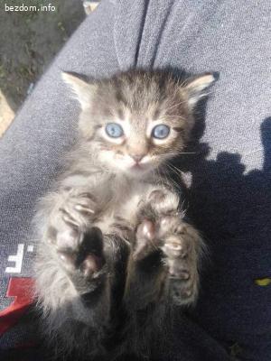 3 прекрасни котета търсят дом