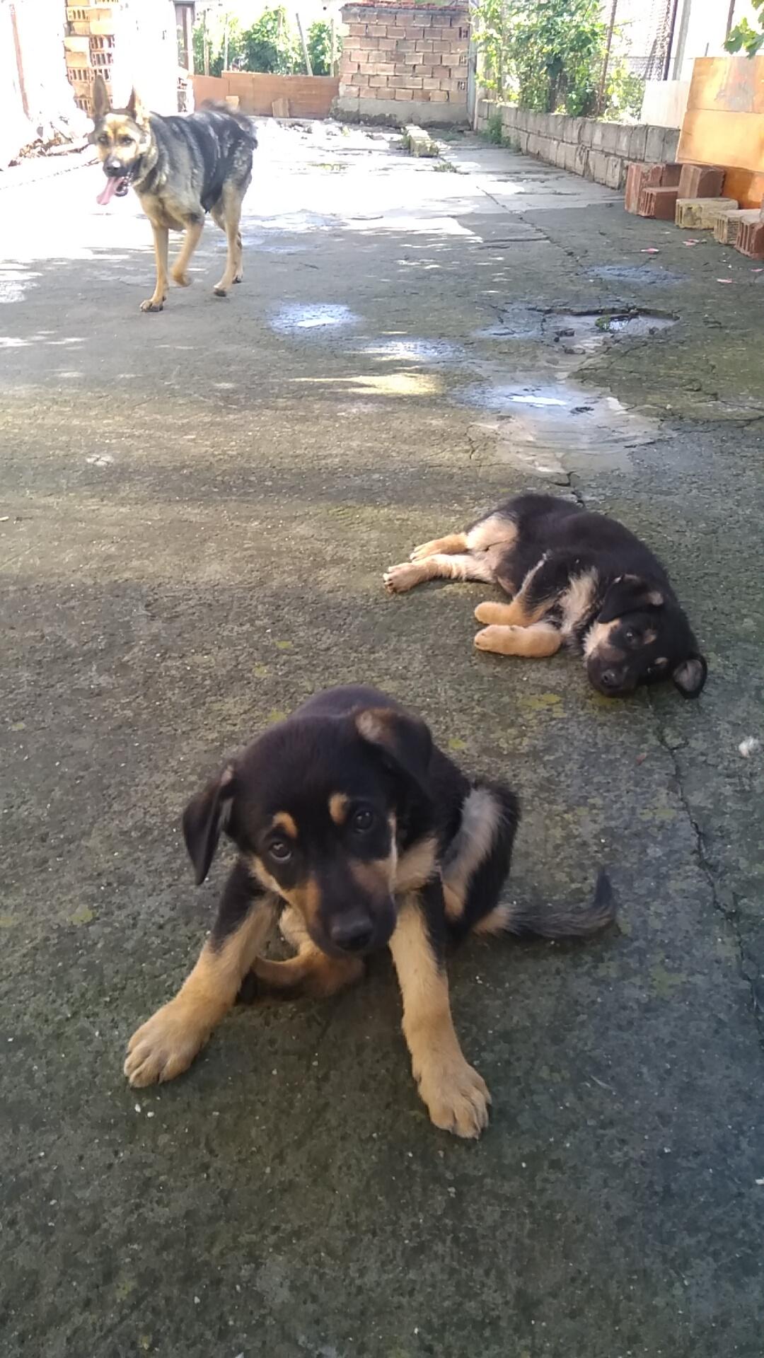 3 кученца си търсят дом