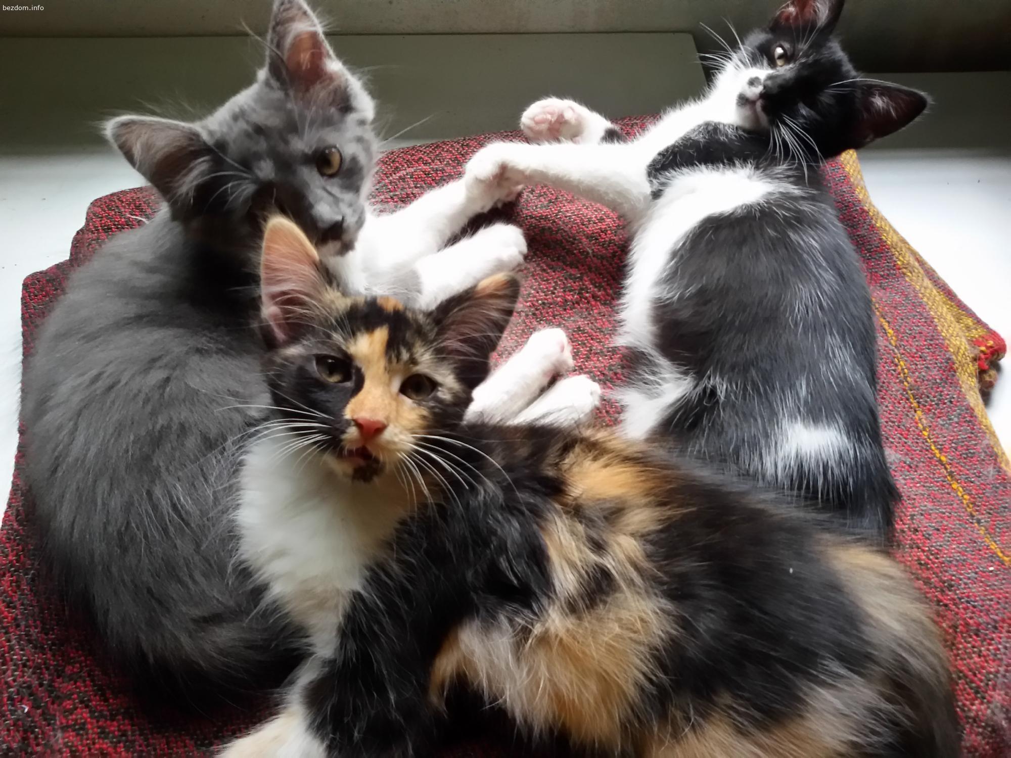 3 женски котенца си търсят отговорни стопани