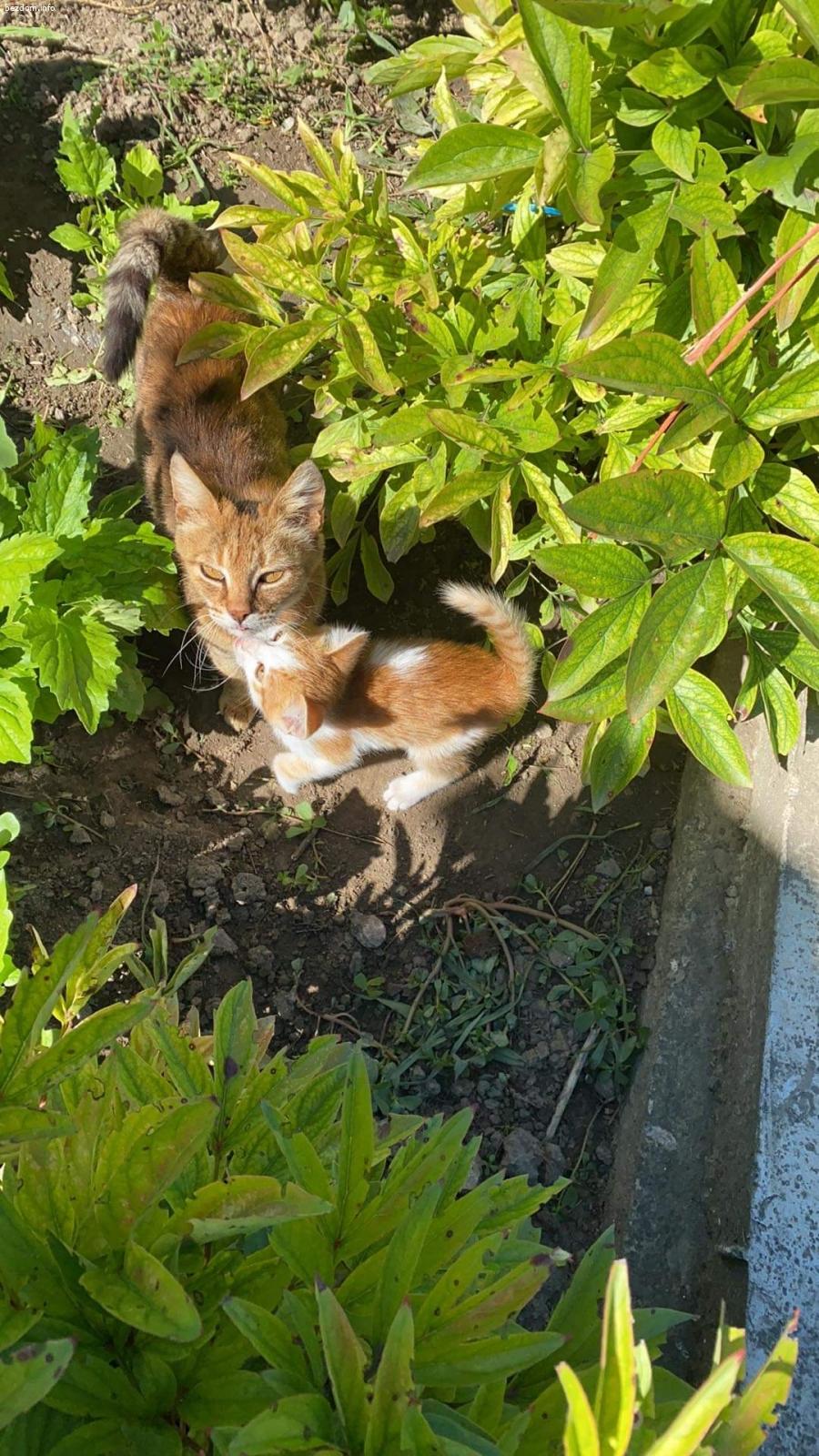 Търсим дом за 3 котета
