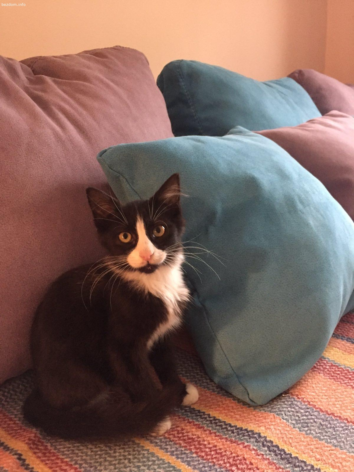 Подарявам малко мъжко котенце на 3 месеца
